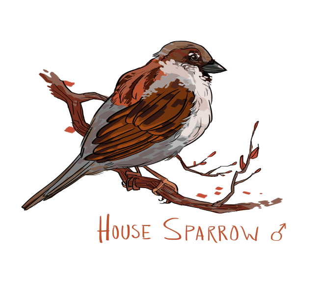 Simple sparrow drawings - photo#22