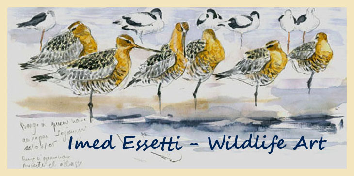 Imed Essetti - Wildlife Art