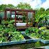 Lush Garden Ideas