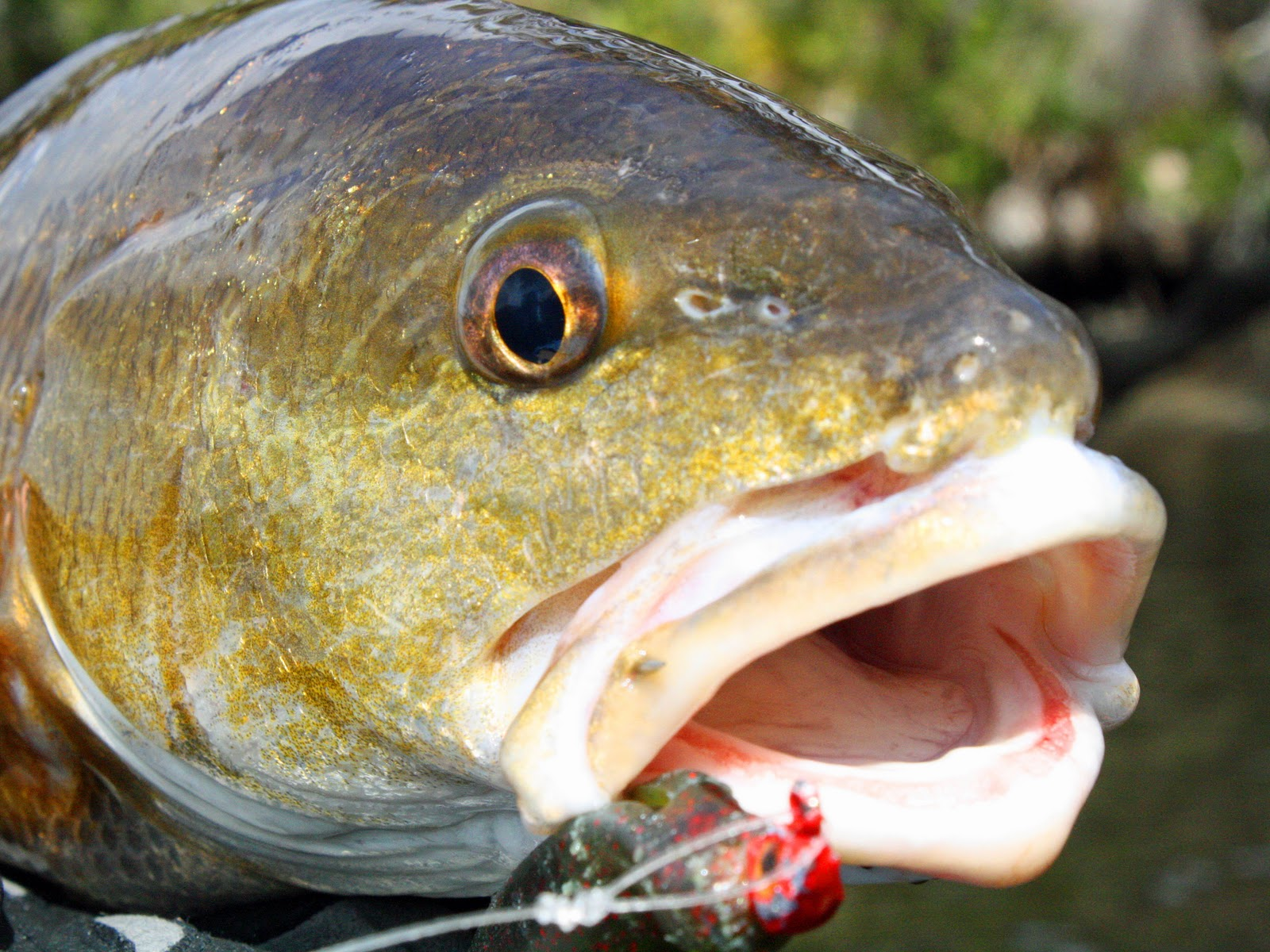 Southern kayak kronicles redfish trout and flounder for Fishing worms near me