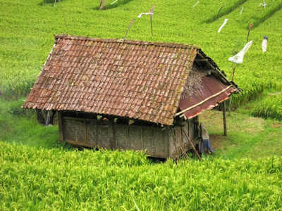 House on a Rice Field in Ubud