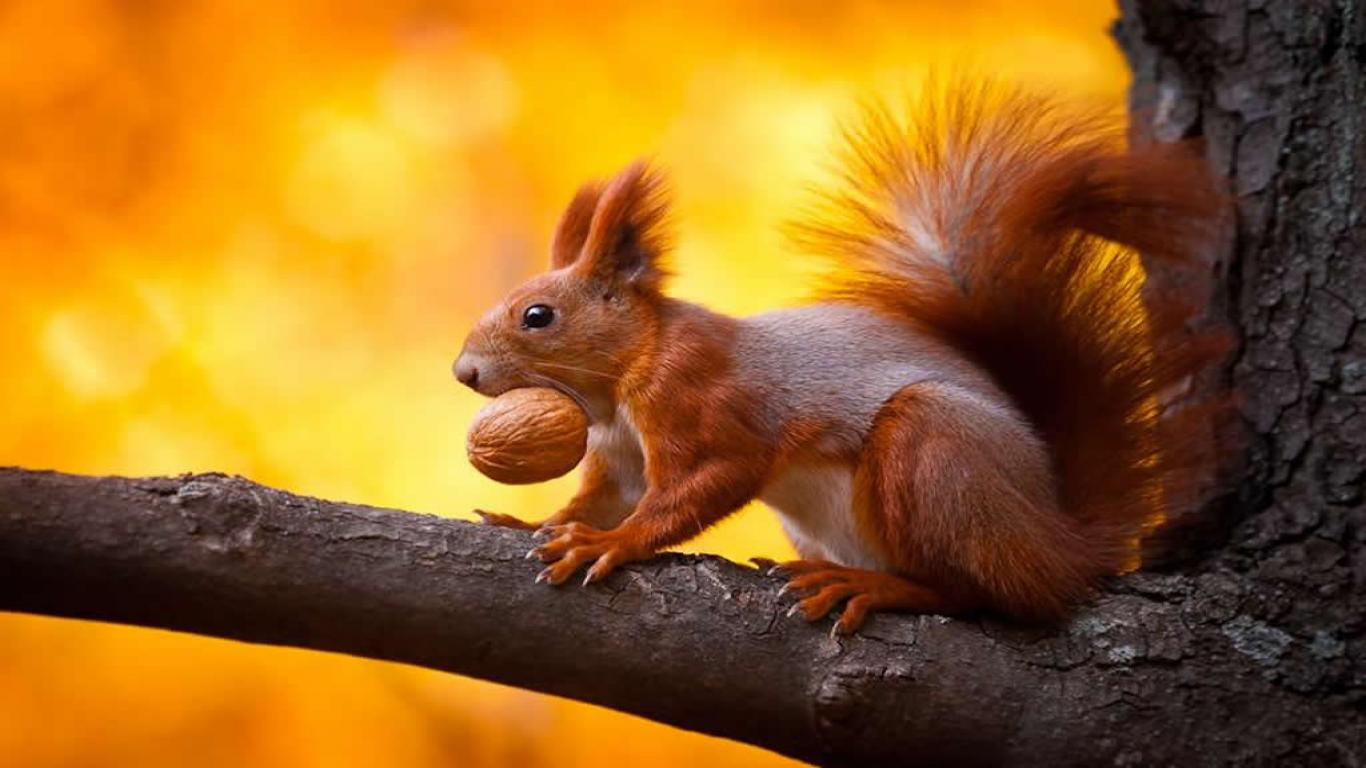 cute squirrel free background - photo #39