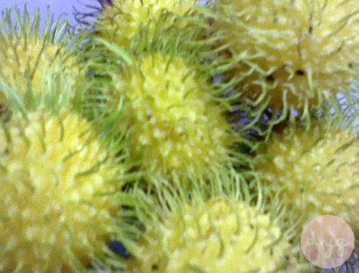 Rambutan Kuning