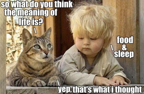 The Meaning Of Life Through The Eyes Of Cat And A Toddler