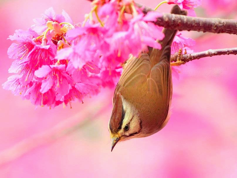 bird-with-pink-flowers