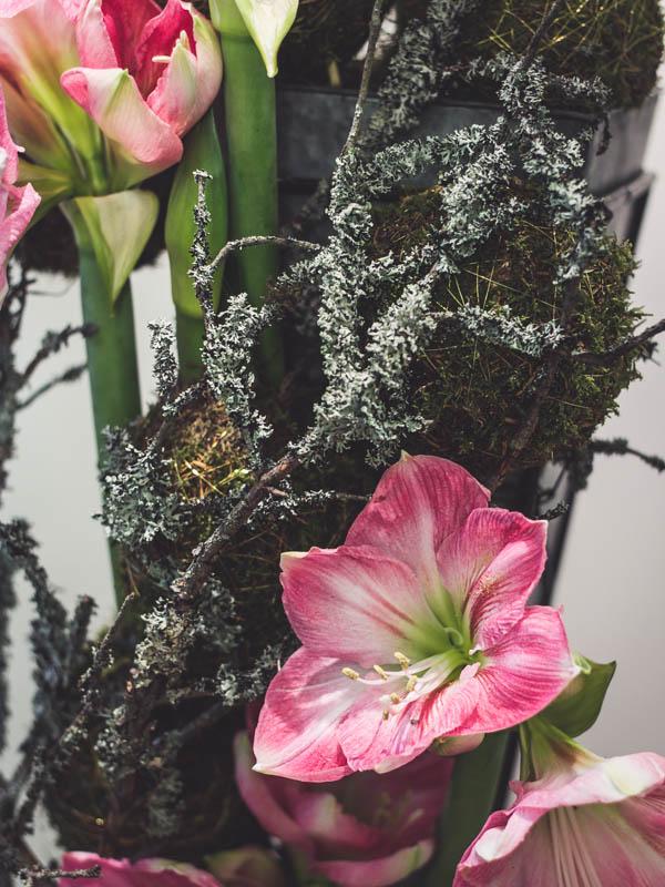 amaryllis, ritarinkukka, joulukukka-asetelma