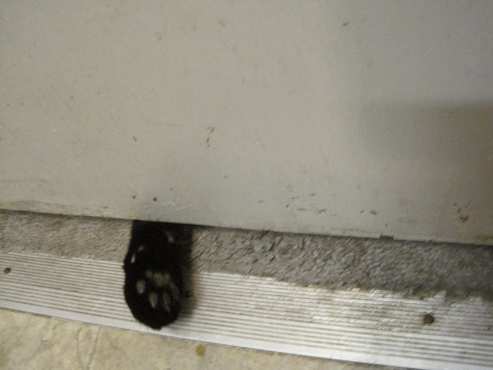 Life with cats insights on faith middle age and herding for Cat bathroom door