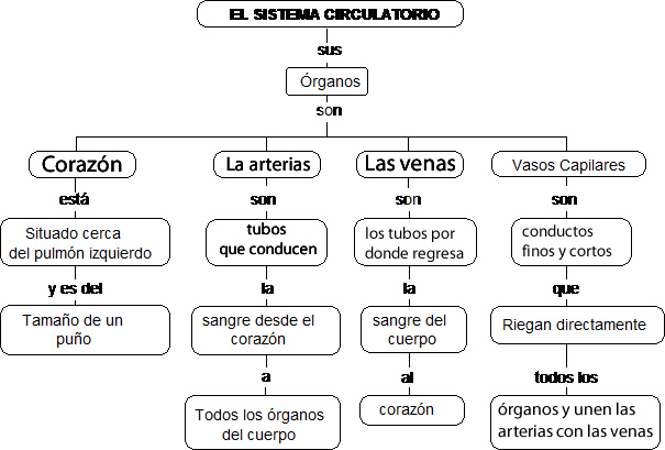 Del Sistema Circulatorio Para Colorear Del Sistema Circulatorio