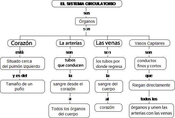 CuentosDeDonCoco.Com: MAPA CONCEPTUAL DEL SISTEMA CIRCULATORIO
