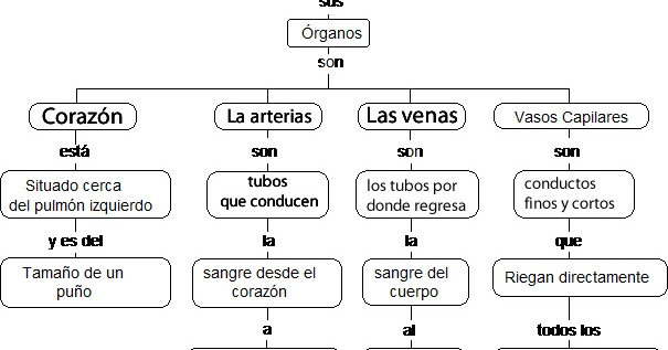 CuentosDeDonCocoCom MAPA CONCEPTUAL DEL SISTEMA CIRCULATORIO