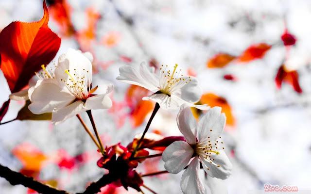 hình nên thiên nhiên full hd cánh hoa đẹp