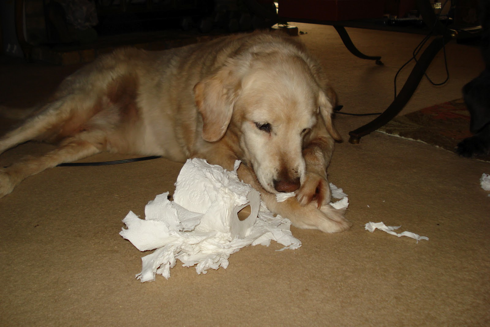 Toilet Paper Insert