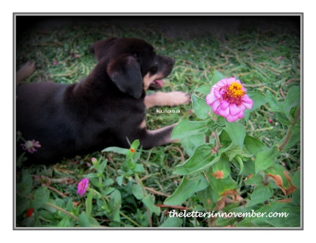 puppy beside flowers