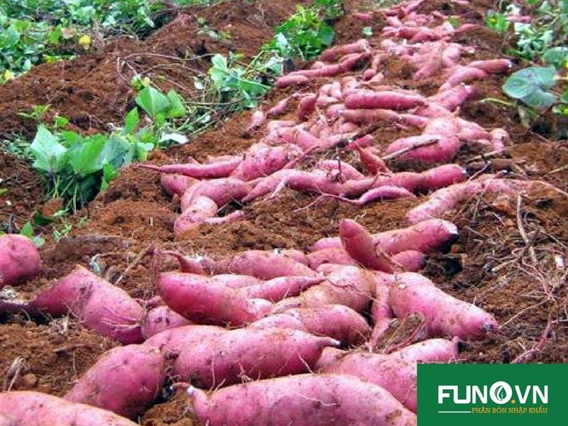 Chúng tôi quan tâm tới giá trị của người làm nông nghiệp