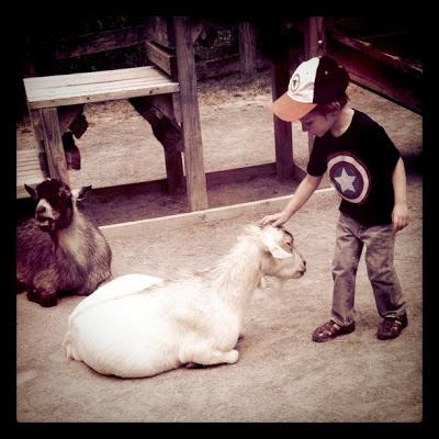 Goat Pettin