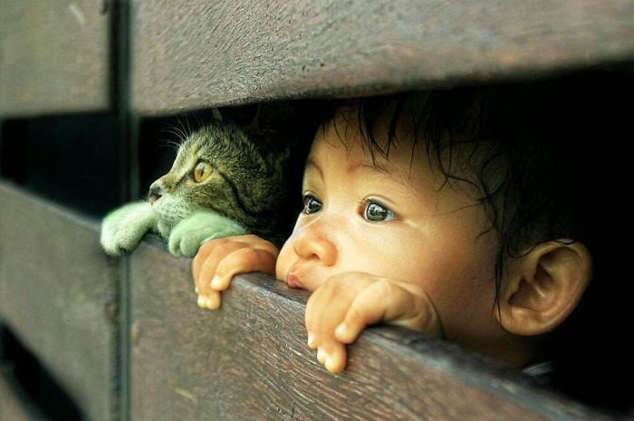 Cute Animals Who Viewed Window