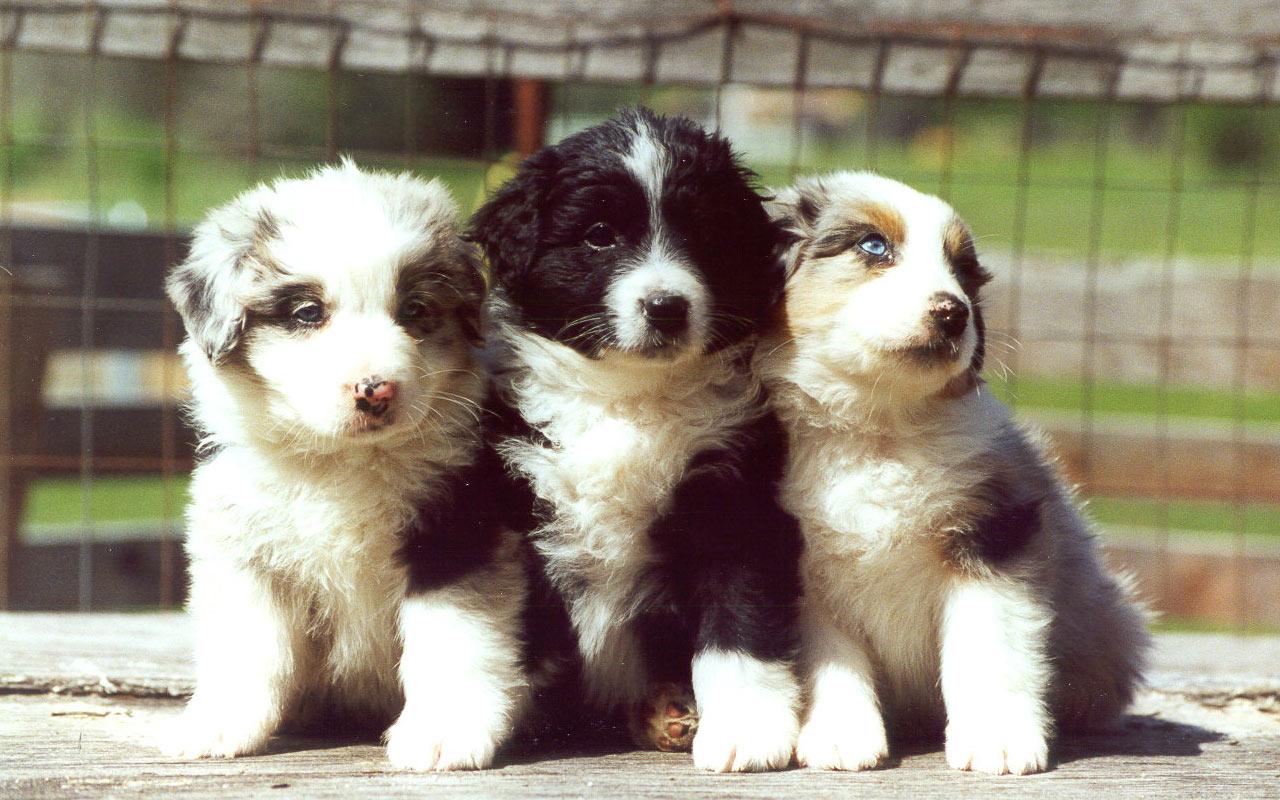 http://2.bp.blogspot.com/-97hWtEh_SWw/UJIW4R-QrSI/AAAAAAAABHg/QIJvikX7RhI/s1600/Cute+Puppies+Pictures.jpg