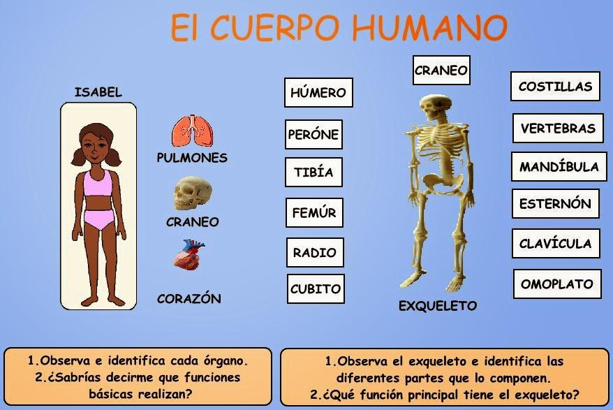RECURSOS PARA TRABAJAR INFANTIL: El cuerpo humano, ¿Cómo somos por ...