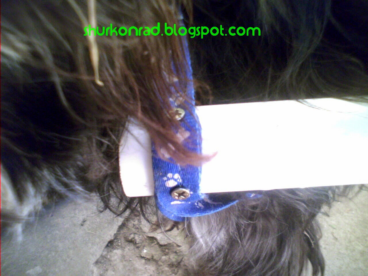 ShurKonrad perro silla ruedas dog 23