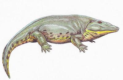 anfibios prehistoricos Eryops