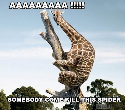 giraffe and spider