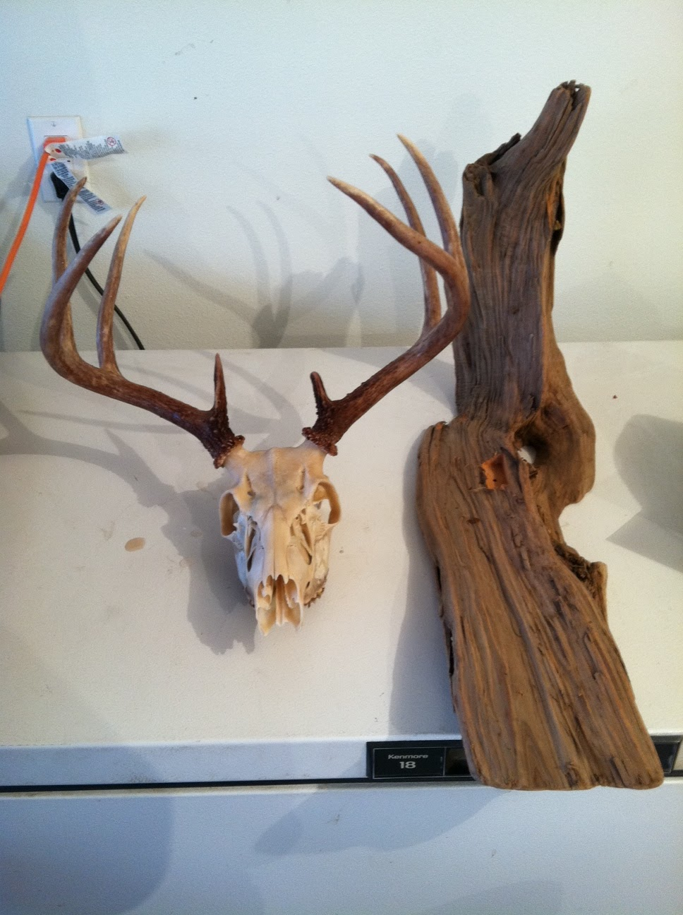 european mount deer skull instructions