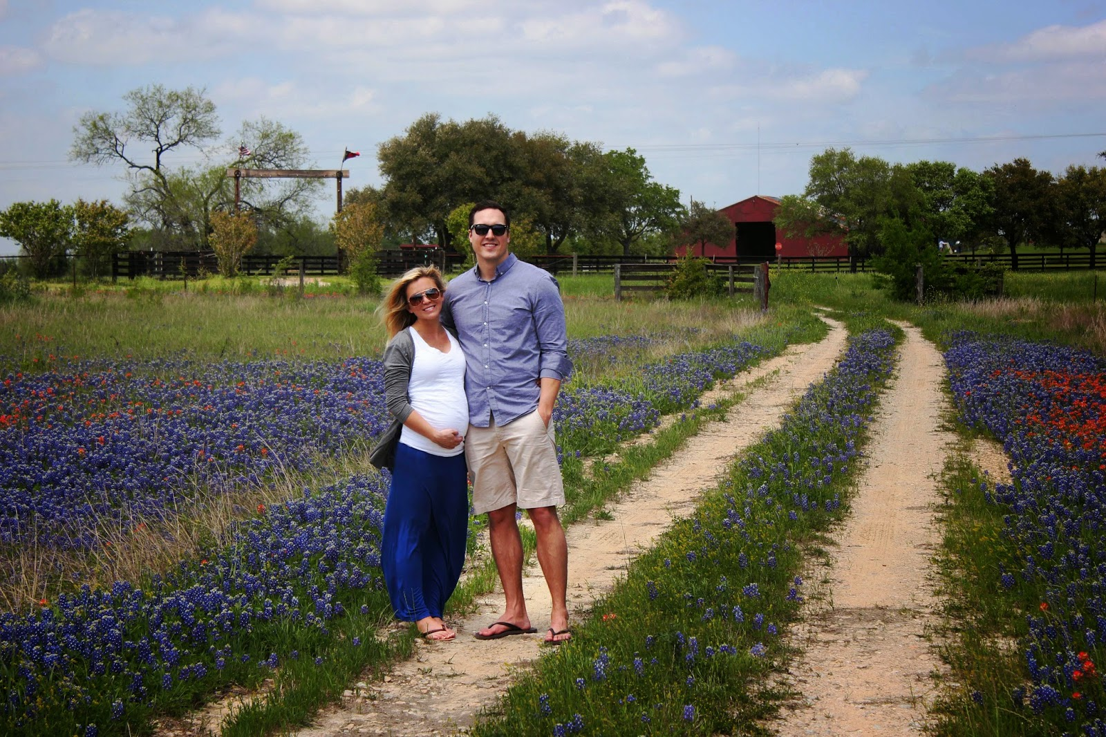 texas bluebonnet sightings