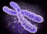 Kromosom X