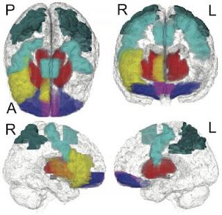Kunci dari penemuan ini adalah menurunnya aktivitas di jaringan otak