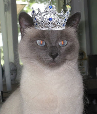 Beautiful Siamese cat wearing jeweled silver crown