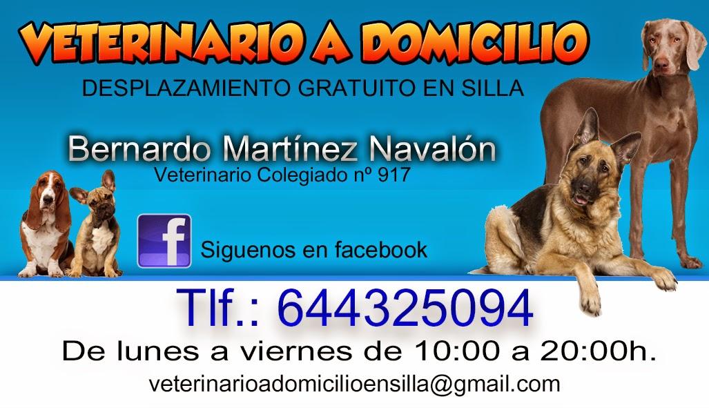 Club pirag isme silla perros gatos y pirag ismo - Clinica veterinaria silla ...