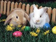 Fondo de Conejos de Pascua. Labels: Conejos, Fondos de Pantalla, . fondo conejo de pascua