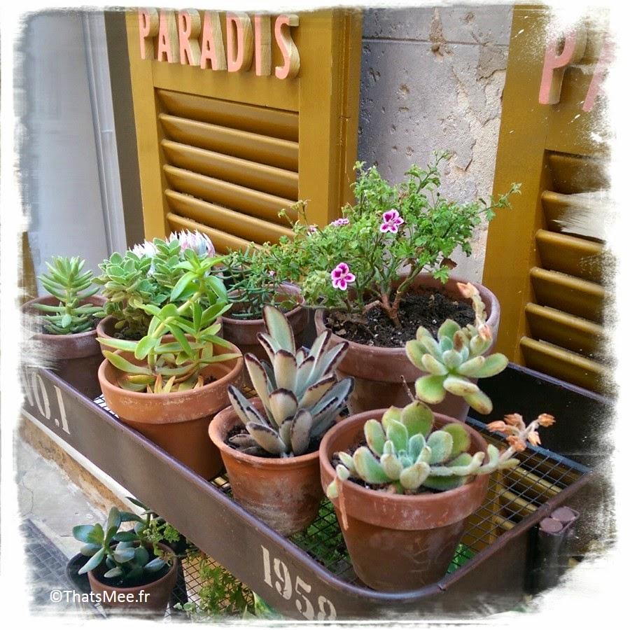 Menorca Minorque Baleares Espagne vacances holidays Ciutadella plante shop boutique Paradis
