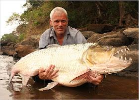goliath tigerfish situslakalaka 9 Monster Sungai Yang Masih Ada Hingga Saat Ini