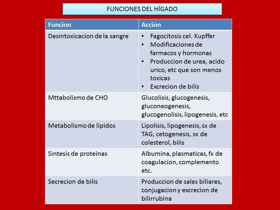HIGADO Y SUS FUNCIONES | Fisiología Médica