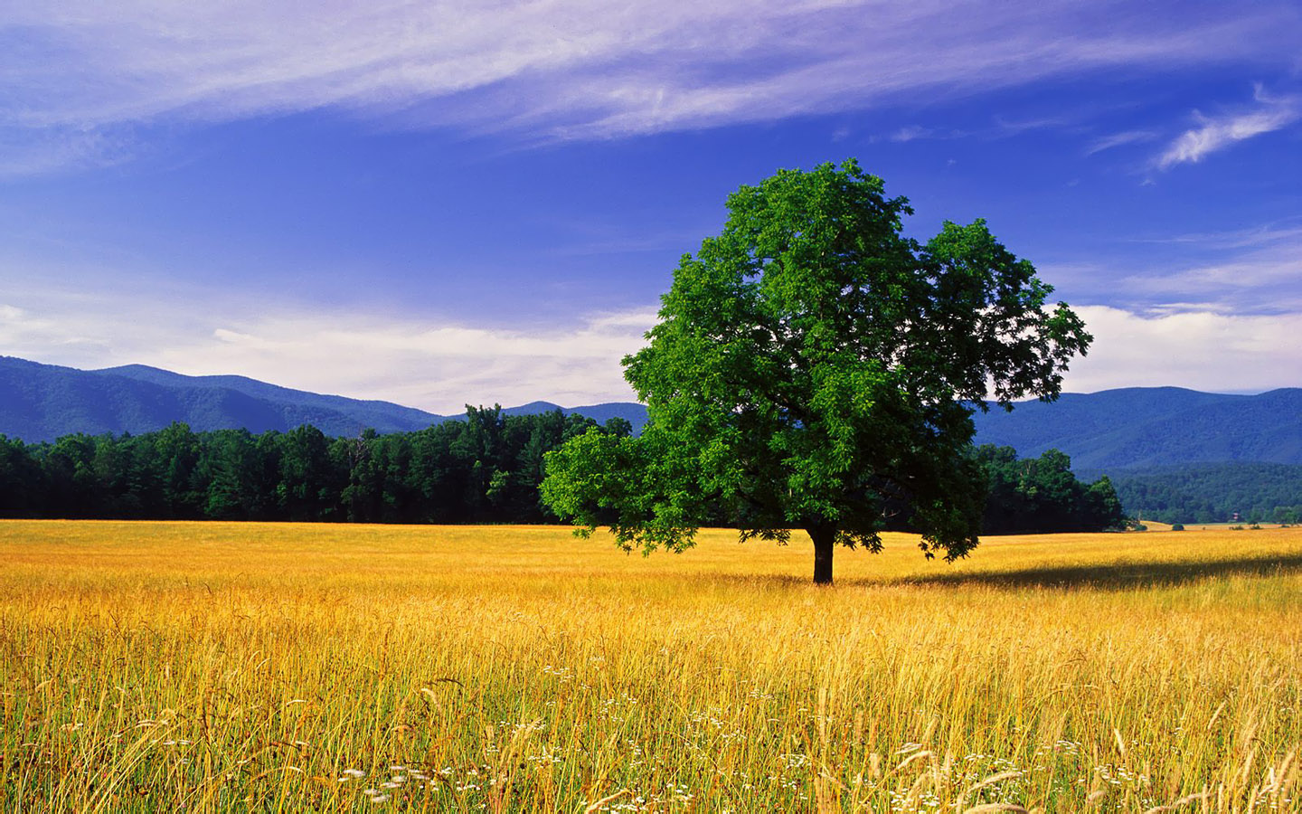 nature scene wallpapers, hd scene wallpapers, hd natural wallpapers