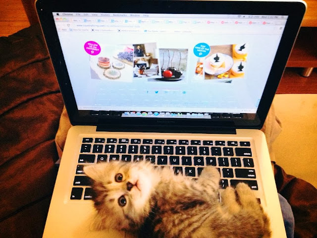 Funny cats - part 82 (40 pics + 10 gifs), cat photo, kitten laying on laptop