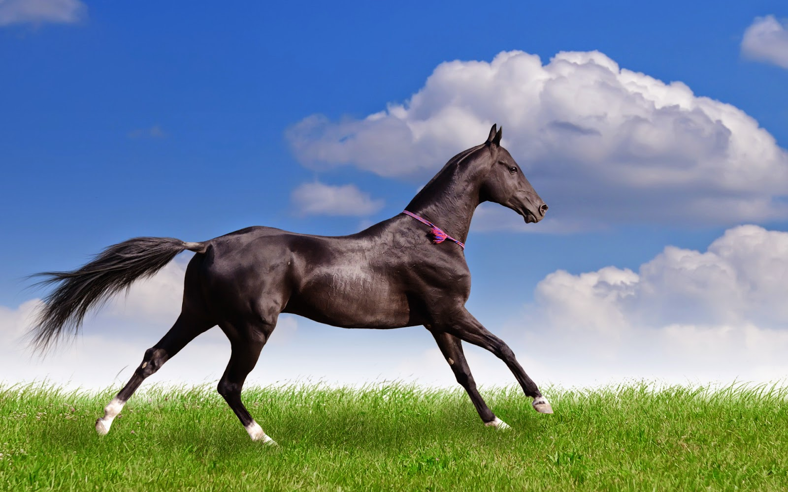 Beautiful Running Animal Wallpapers2014