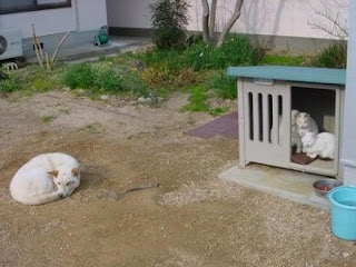 Gatos expulsam cão da casota