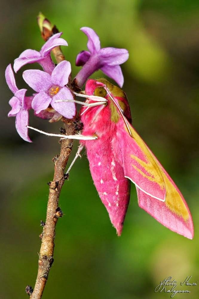 http://auvergne-fleurs-insectes-araignees.blogspot.fr/?m=1