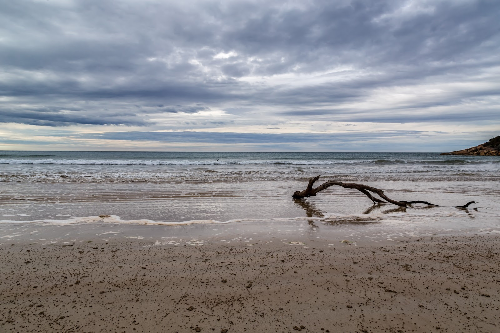 timber in water low tide johnny souey cove wilsons promontory