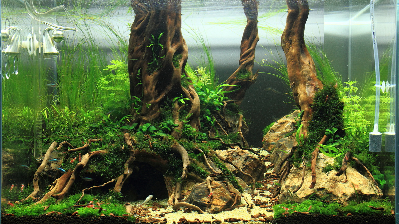 Fishes Amp Aquariums Fish Tank Setups Planted Aquarium Tank Moss Tetra Guppy Fish And A Lot Of