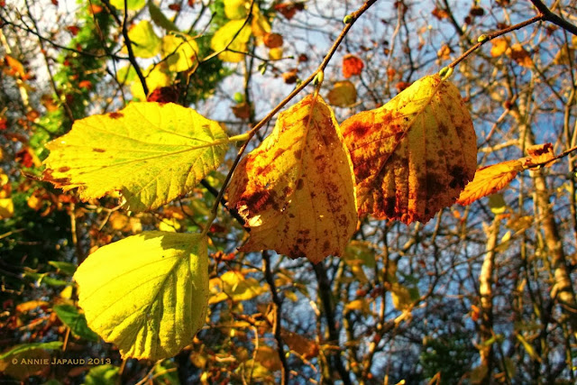 leaves for gold© Annie Japaud 2013, blog, photography, autumn, leaves, nature, colourful, golden