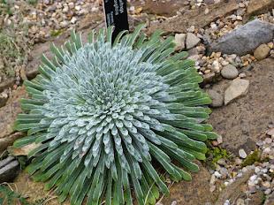 Une curieuse plante