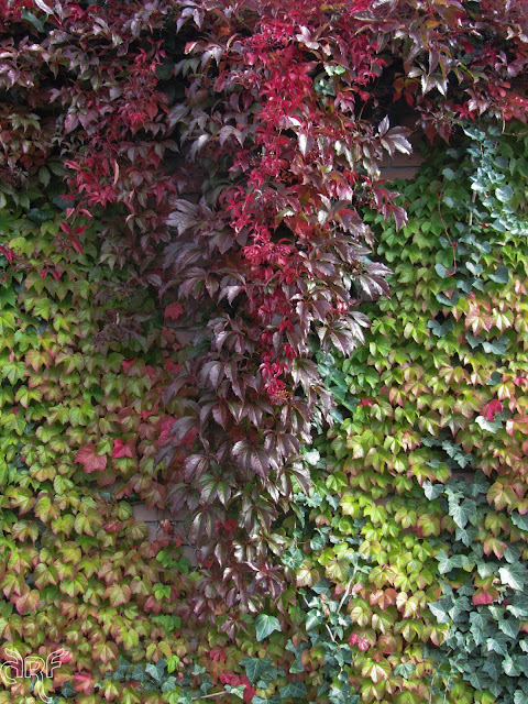 red and green ivy