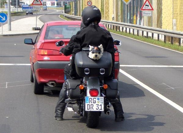 Bolsa Para Carregar Cachorro Na Moto : Dicas peludas transportar c?es em moto ? permitido