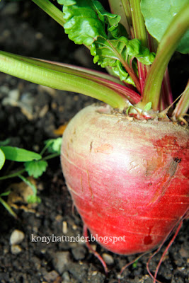 august-in-the-garden-beetroot