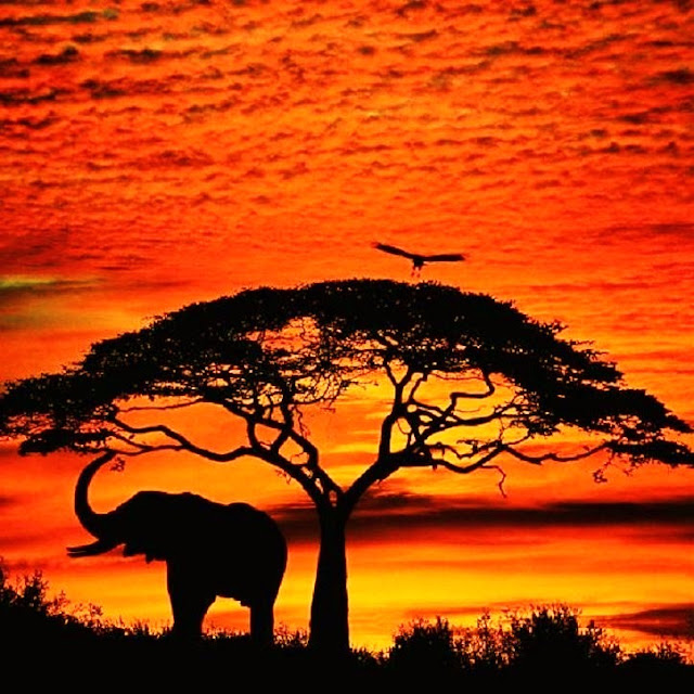 pictures of african sunset
