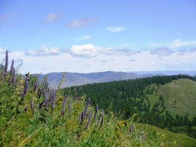 Лес Монголии
