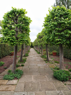 Pleached avenue, Garden design London and Sussex